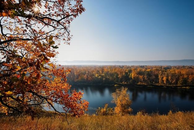 美しい秋のカエデの葉。秋の森の風景。