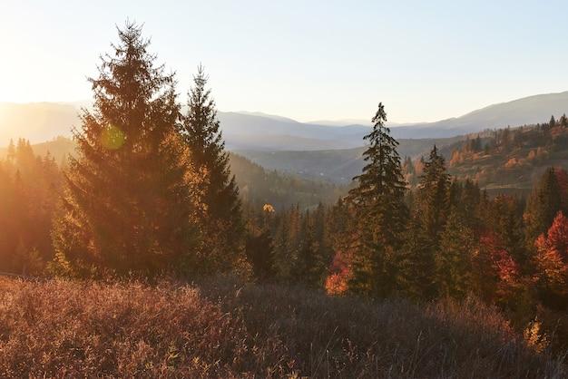 カルパティア山脈、ウクライナ、ヨーロッパの深い森の谷の上の視点で美しい秋の朝。