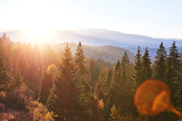 Beautiful autumn morning on view point above deep forest valley in carpathians, ukraine, europe.