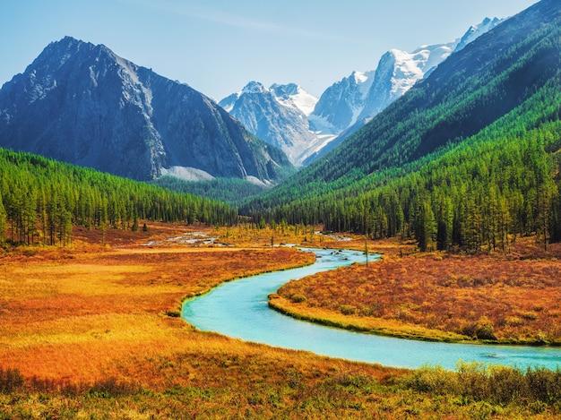 曲がった広い山川のある美しい秋の山の風景。秋の大きな山の川と金色の紅葉のカラマツの木と明るい高山の風景。アルタイ山脈。