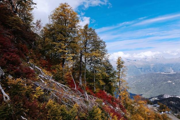 Красивый осенний горный пейзаж с деревьями на кавказе