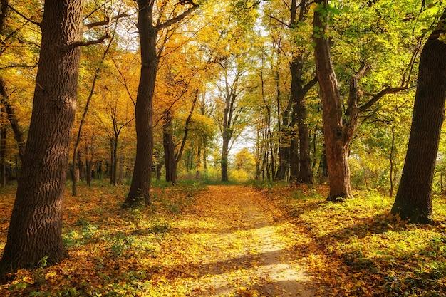 아름다운 가을 공원과 인도의 여름 풍경