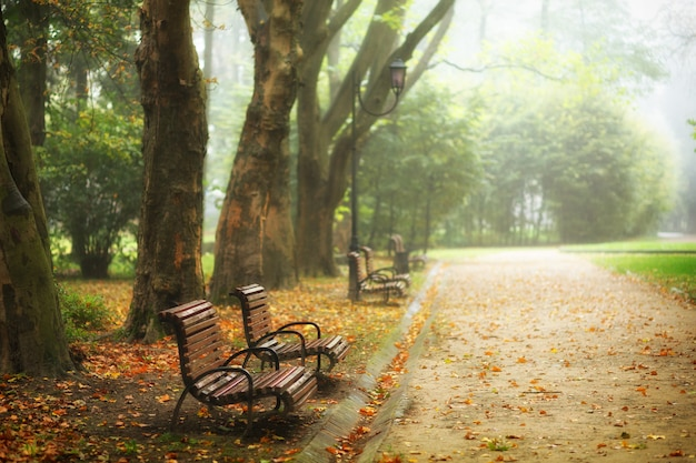 벤치가있는 아름다운 가을 공원
