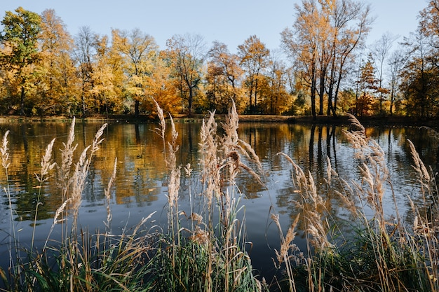 晴れた日に湖のある美しい秋の公園