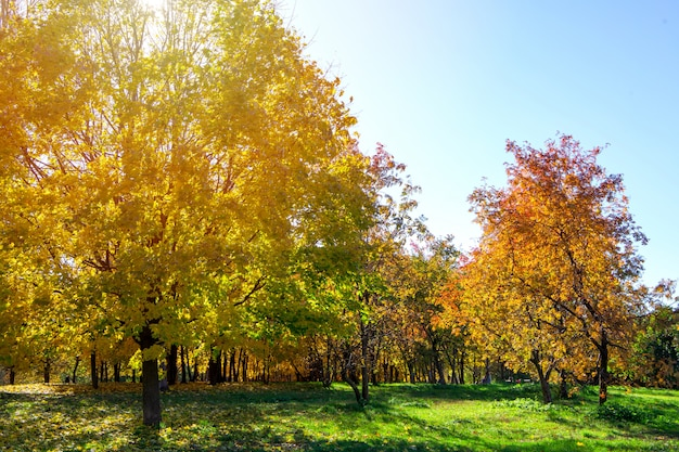 Beautiful autumn park with orange leaves