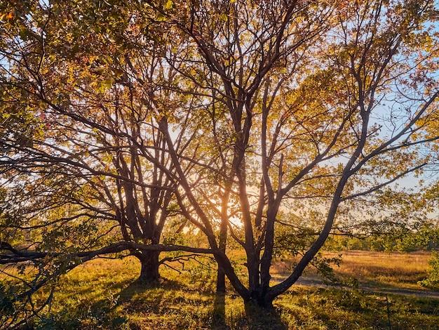 Красивый осенний парк с желтыми деревьями в солнечную погоду