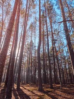 晴天の黄色い木々のある美しい秋の公園