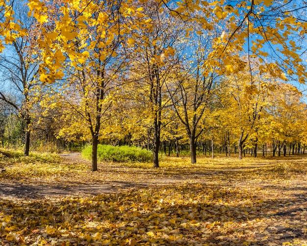 もみじの路地と美しい秋の公園
