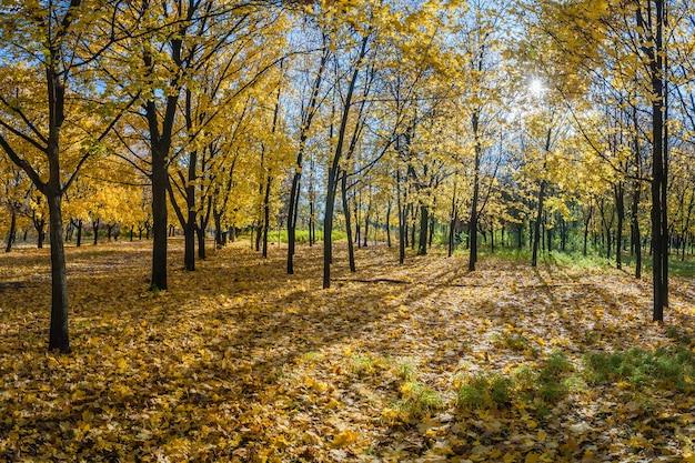 단풍 나무 골목이있는 아름다운 가을 공원