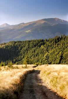 Красивый осенний путь к лесу в горах.