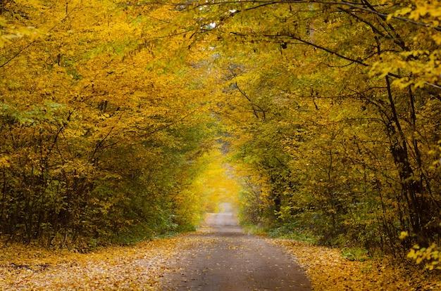 美しい秋のロマンチックな木のトンネル。ウクライナの自然の木のトンネル。秋の恋のトンネル。愛の秋の森のトンネル。愛の森のトンネル