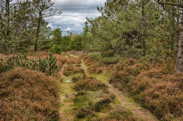 さまざまな種類の茶色と緑の植物が茂る森の真ん中にある美しい秋の風景