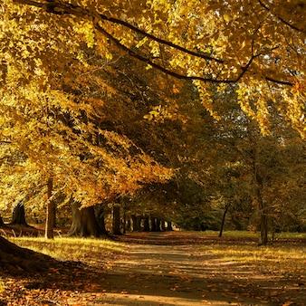 Красивые осенние пейзажи в парке с опавшими на землю желтыми листьями