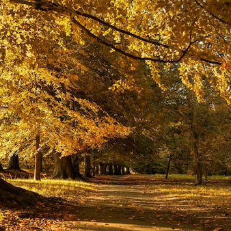 Beautiful autumn scenery in the park with the yellow leaves fallen on the ground