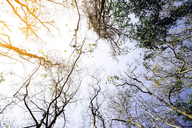 Beautiful autumn season forest with blue sky.