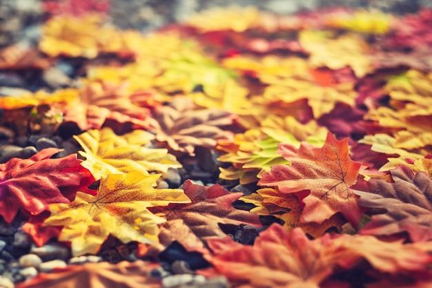 Beautiful autumn season leaves