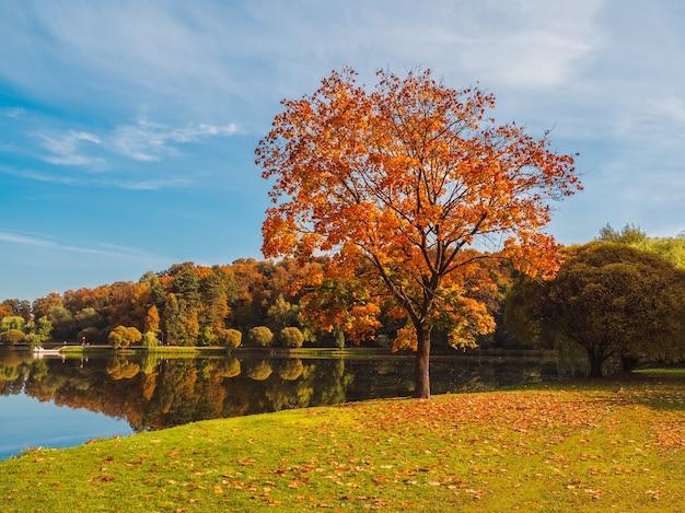 公園の赤いカエデの木と美しい秋の日当たりの良い風景。モスクワ。