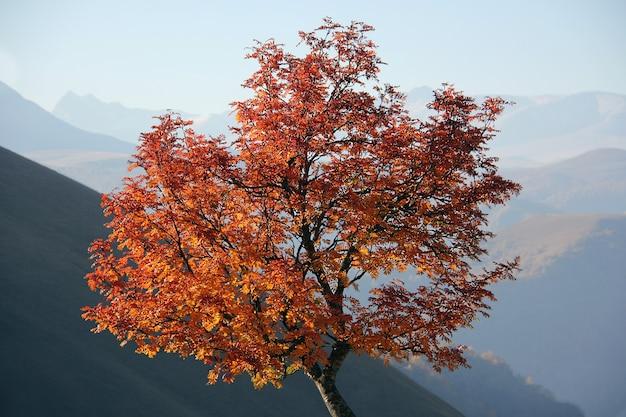 뒤에 산들과 아름 다운가 나무