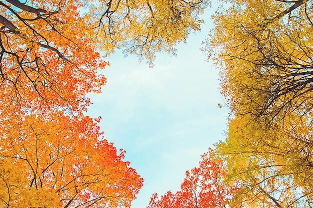 Beautiful autumn trees foliage in shape of heart in blue sky overhead