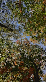 澄んだ青い空に色鮮やかな葉を持つ美しい秋の木々