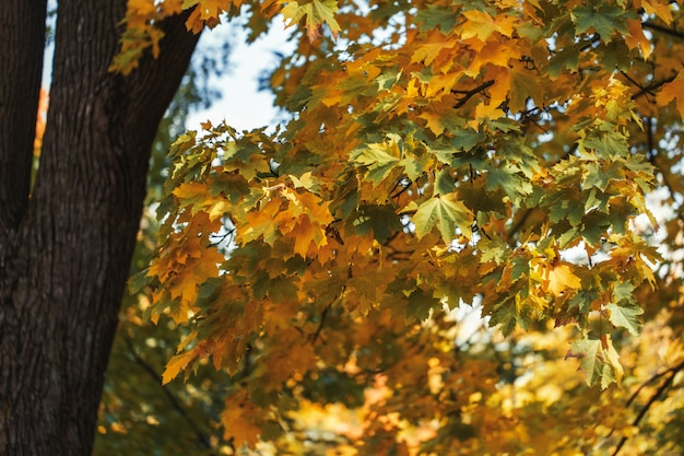 Красивые осенние деревья с оранжевыми листьями