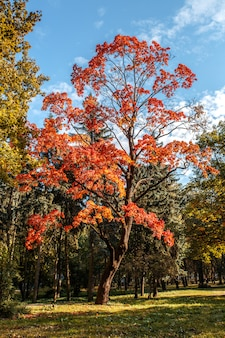 Beautiful autumn trees with orange leaves