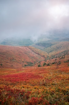 Beautiful autumn in ukraine. mountain hills covered red carpet leaves