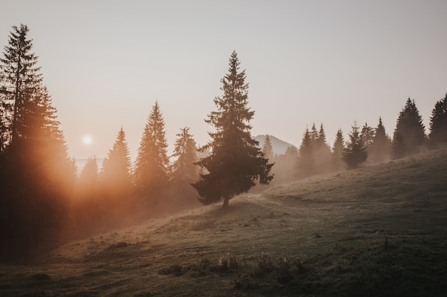 Beautiful autumn view of foggy carpathian mountains in the early morning