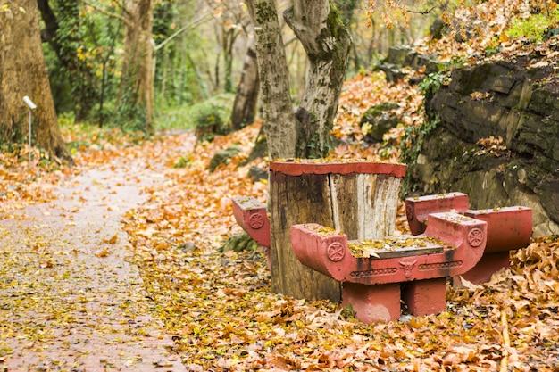 Beautiful autumn view of the tbilisi botanic garden