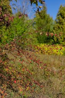 美しい秋の荒野の風景