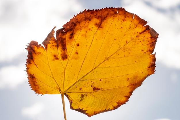 美しい秋の黄色い葉