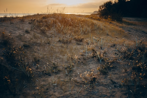 Красивый осенний пейзаж дикой природы на закате. живописный вид на пустынный склон с сухой травой на восходе солнца.