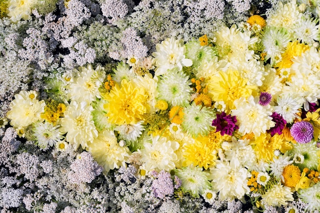 아름 다운 단풍 노란색과 흰색 꽃 배경 화려한 국화 꽃 상위 뷰