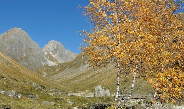 유럽 알프스의 바위 산 앞 아름다운 단풍 노란 나무