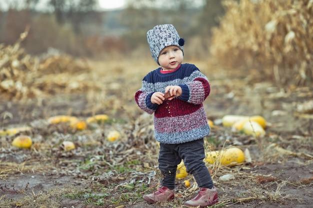 暖かいスタイリッシュなセーターで美しい赤ちゃんフィールドでトウモロコシを食べる少女。収穫時期。子供のための有機農業。霧の秋の夜の屋外でかわいい子。幸せな子供の日のコンセプト