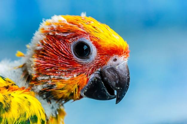 아름다운 아기 앵무새