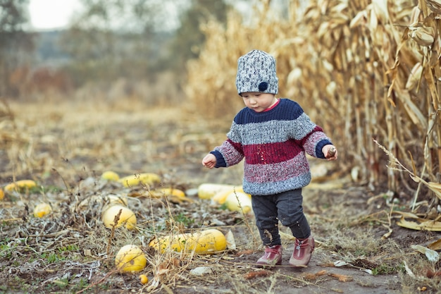 Beautiful baby in warm stylish sweater standing in middle of corn field.