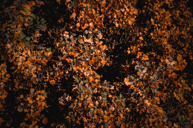 Красивый фон осеннего пейзажа с красочными сухими листьями
