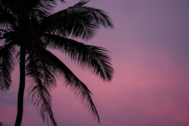 Красивый фон из пальм, завораживающий закат
