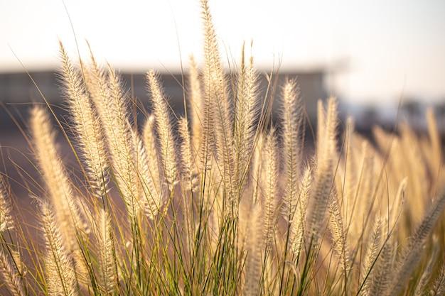 日の出の野原植物の美しい背景。