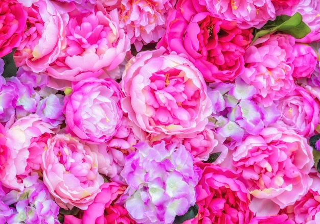 Beautiful background of pink peonies.