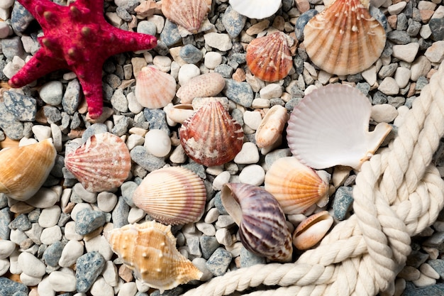 Beautiful background with colorful seashells and ropes lying on seashore