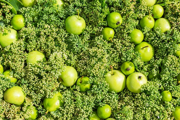 Beautiful background with green apple in top view