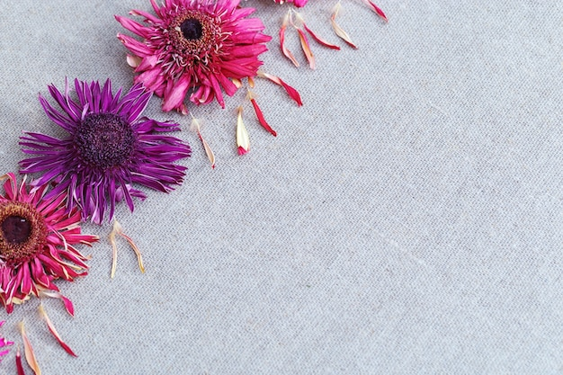 밝고 마른 꽃 거 베라에서 식물 표본 상자와 아름 다운 배경. 텍스트를위한 공간을 복사하십시오.