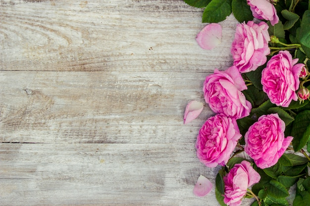 Beautiful background with pink roses. selective focus.