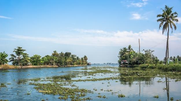 Красивые заводи туристических направлений кералы, индия. река покрыта зелеными растениями.
