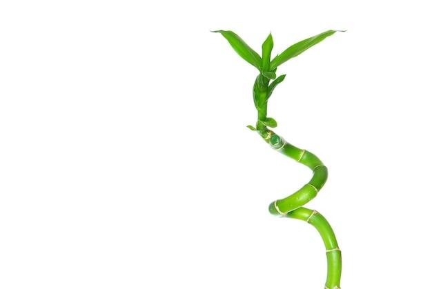 緑の背景に分離された美しい竹