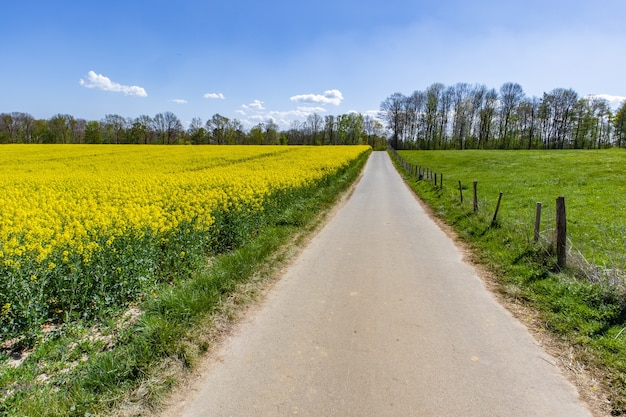 Красивое корковое поле с зелеными полевыми цветами и голубым небом