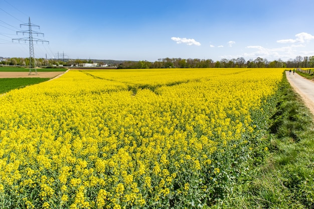 Bellissimo campo di rafia con fiori di campo verdi e un cielo blu