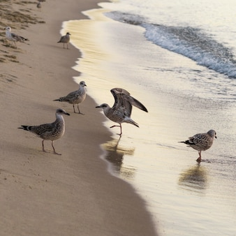Beautiful beach lifestyle concept